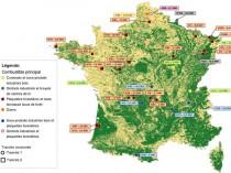 Grenelle : 32 projets de centrales biomasse ...