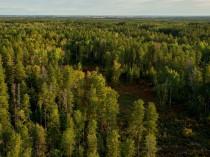 La filière bois renforce encore ses exigences ...