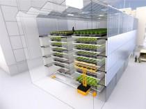 Les fermes urbaines poussent à vue d'œil