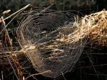 Bientôt des tissus synthétiques imitant la soie ...