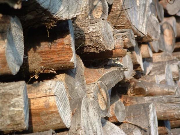 La biomasse, une énergie renouvelable pas assez ...