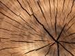 Les chaudiéristes biomasse, inquiets, demandent ...