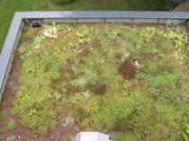 Les toitures végétalisées en hausse de 50% en 2008