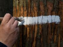 Le Comité stratégique de la filière bois ...