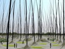Des roseaux géants oscillent dans le vent pour ...