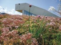 Les toitures végétalisées se couvrent de ...