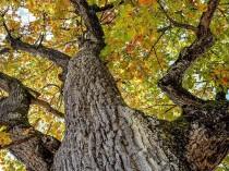 En plein paradoxe, la filière bois demande de ...