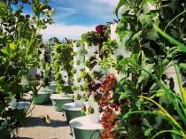 Un nouveau genre de fermes urbaines débarque à ...