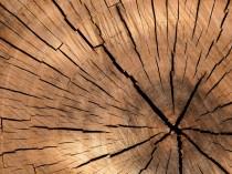 Pourquoi la filière du bois semi-transformé ...