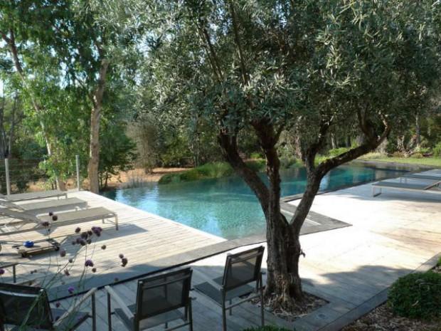 Une végétation préservée autour de la piscine
